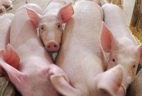 猪肉价格上涨.jpg